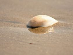 i found this seashell on the shore... i promised her that... by Renata Wojewoda 